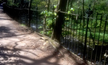 The railings have grown into the tree and the roots have pushed up the surface of the walkway
